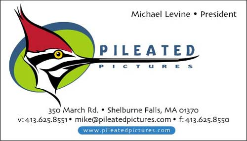 Pileated Pictures